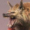 Aegis J Hyena's Avatar