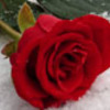 winter_rose